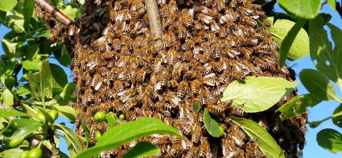 Bastis Imkerei Bienen